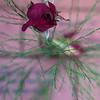 A rose left behind